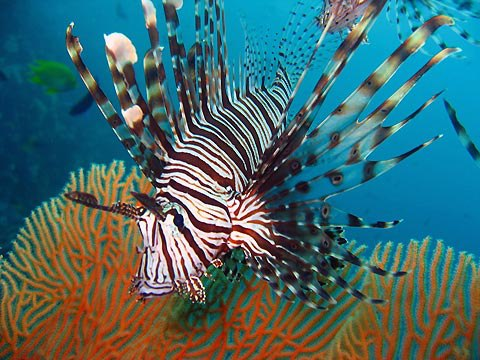 http://www.absokoun.com/PortalData/Subsystems/Article/uploads/Image/wonderfull%20fishes/480975_511558628869113_1310897367_n.jpg